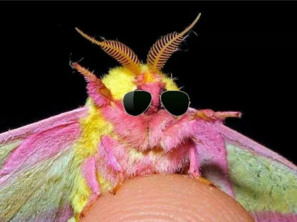 Moth Wearing Sunglasses